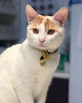 Nacho the cat, All Creatures Veterinary Clinic